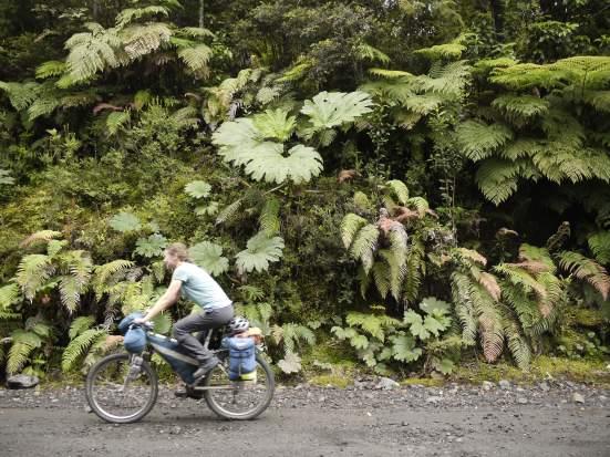 Rainforest flora in Parque Pumalin.
