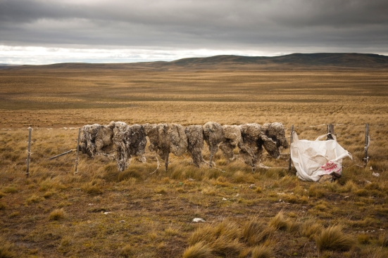 Sheep skins dry on a barbed wire fence. The Argentine side is even more barren.