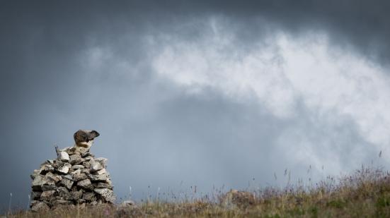 On the summit of China Head Mt. a marmot surveys his kingdom.