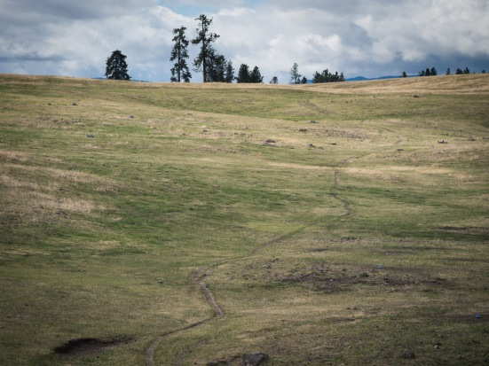 Near Princeton, dead-end cow tracks have us longing for singletrack.